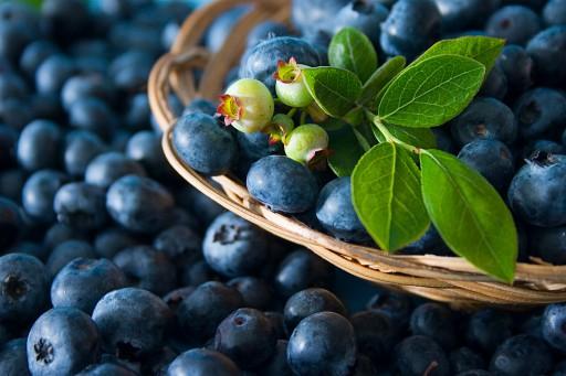 Khasiat Buah Blueberry Untuk Penyakit Kanker