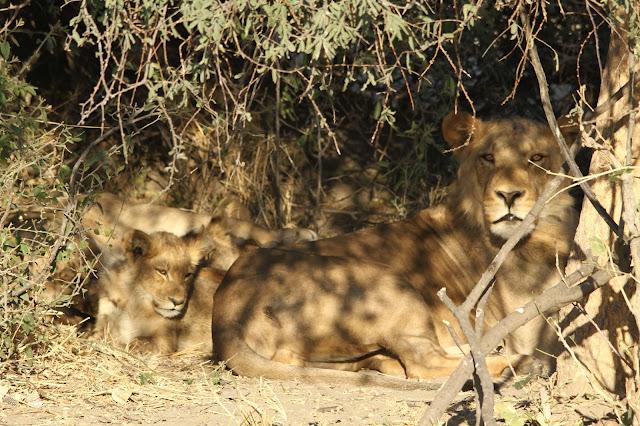 VIAGEM DE OVERLAND - Parte 3 - De Windhoek, passando pelo Okavango e Chobe, até às Cataratas de Vitória