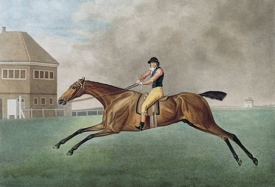 Baronet by George Stubbs