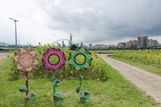 台北市內湖區23萬株向日葵花海~彩虹河濱公園