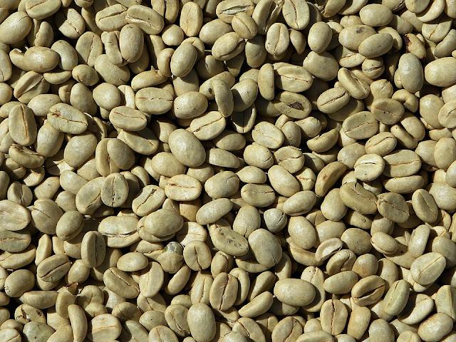 manfaat kopi hijau untuk menurunkan berat badan
