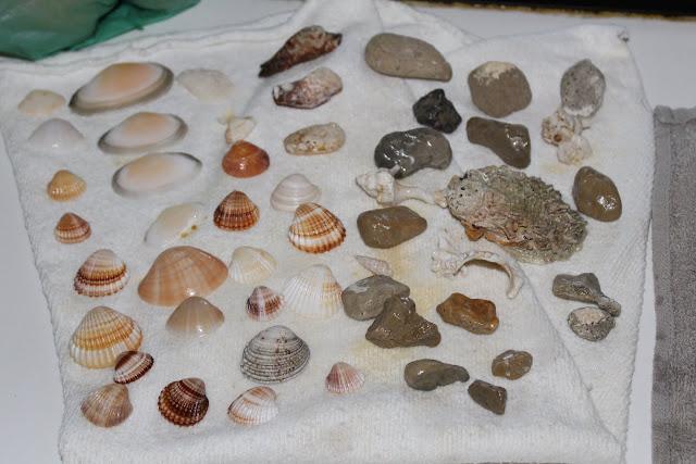 Secando conchas playa
