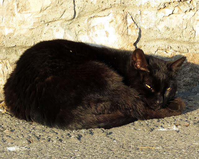 Black cat, Via del Molo Mediceo, Livorno