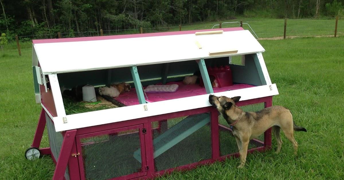 All things guinea pig caviary setup for How to build a guinea pig house