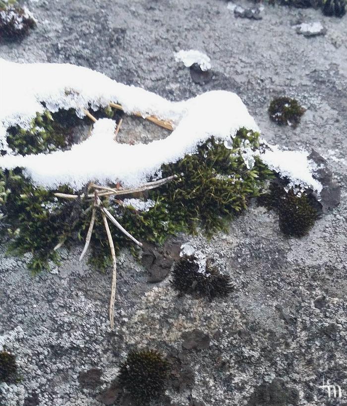 lunta ja sammalta kalliolla