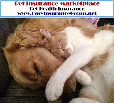 EasyInsuranceGroup.net - Pet Health Insurance - Pet Products - EasyInsuranceGroup.com