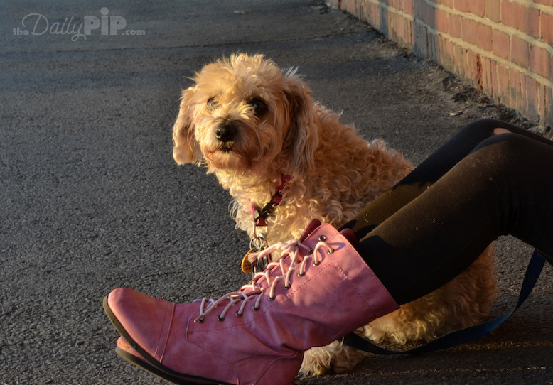 Dog waits for family to return when pink meets black