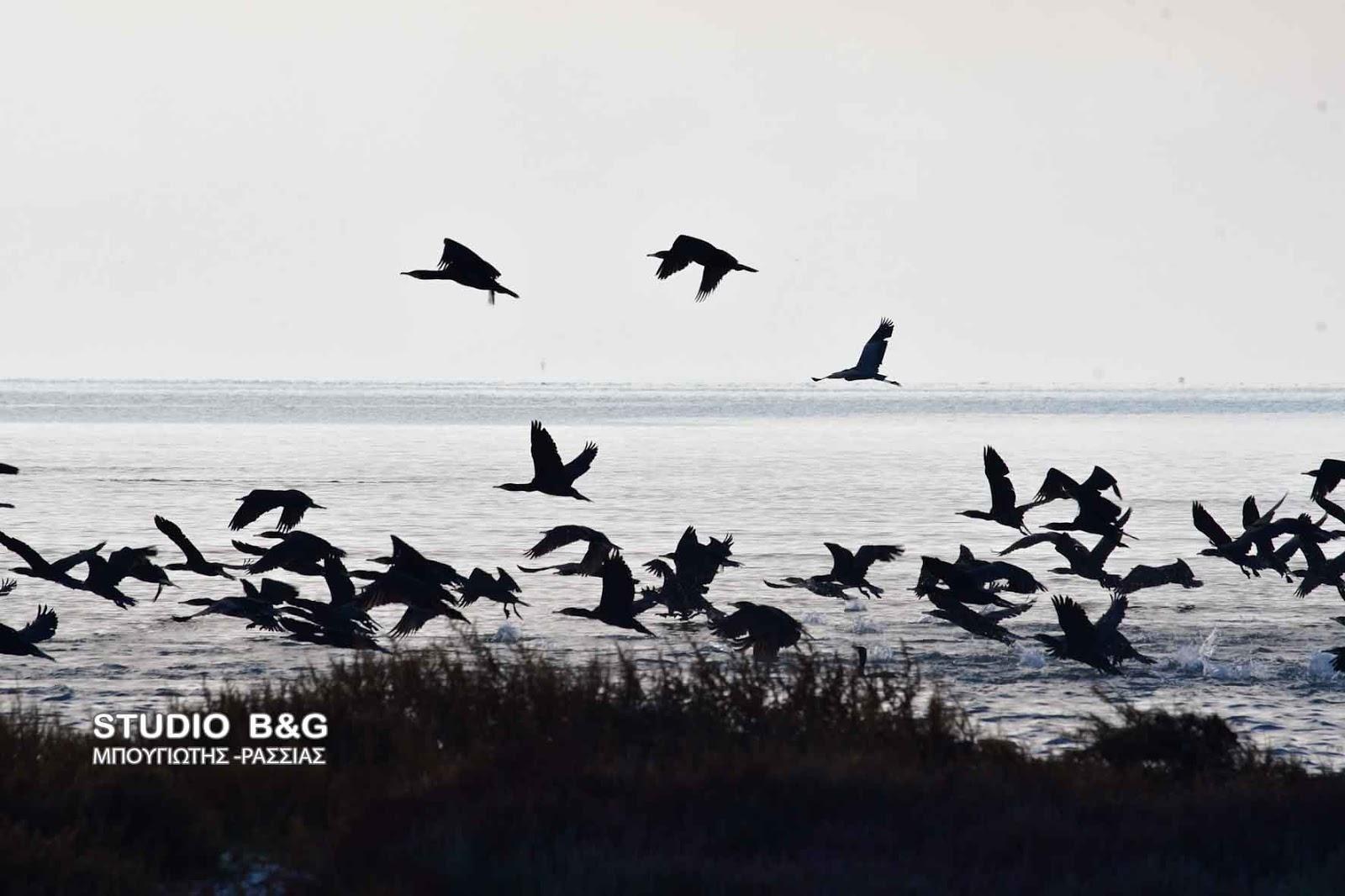 σούπερ μεγάλο μαύρο πουλί