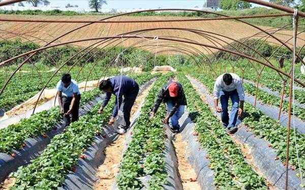 Σύσκεψη στην Περιφερειακή Ενότητα Μεσσηνίας για τους εργάτες γης