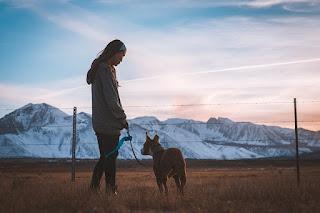 traveling atau berpergian dengan hewan peliharaan