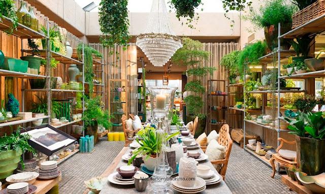 Las plantas que debes tener en tu hogar para un lugar armonico