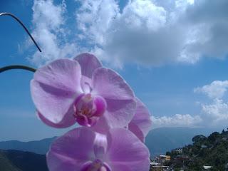 Orquideas regalada por un gran Maestro Juan Gonzalez, que me hizo cree en vender Bienes Raices