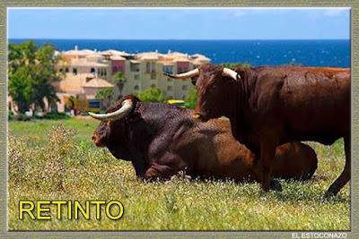 Diferentes razas de toros - Página 5 14495494_1045738905543544_5744189154891410489_n