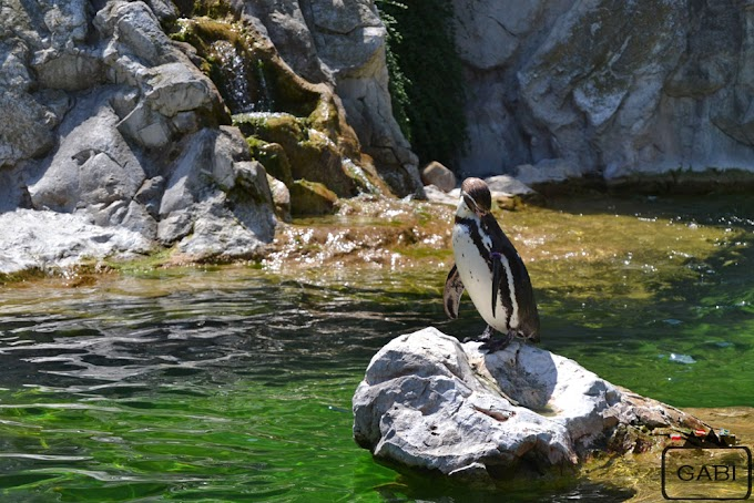Tiergarten Schönbrunn – najstarsze zoo świata