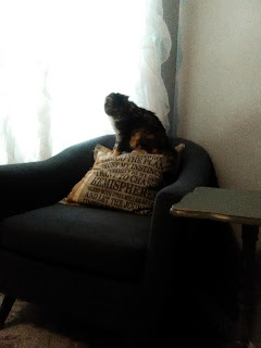 Silly loved furniture of low enough height she could jump onto because cats are independent.