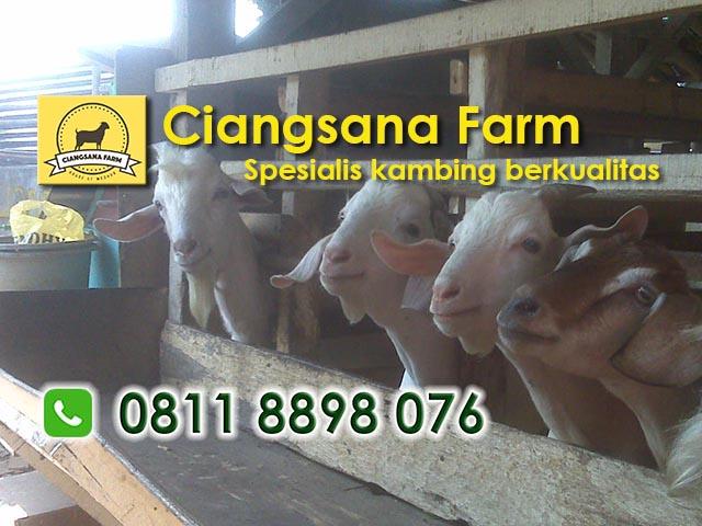 Ciangsana Farm