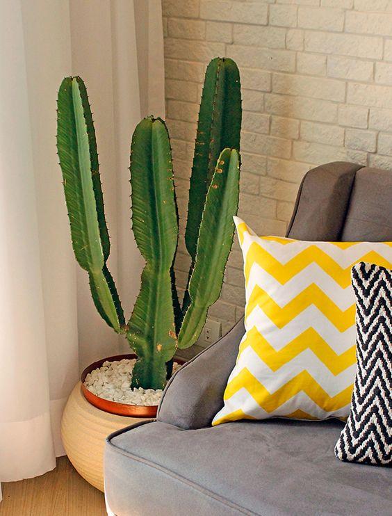 vaso-cactus-decor