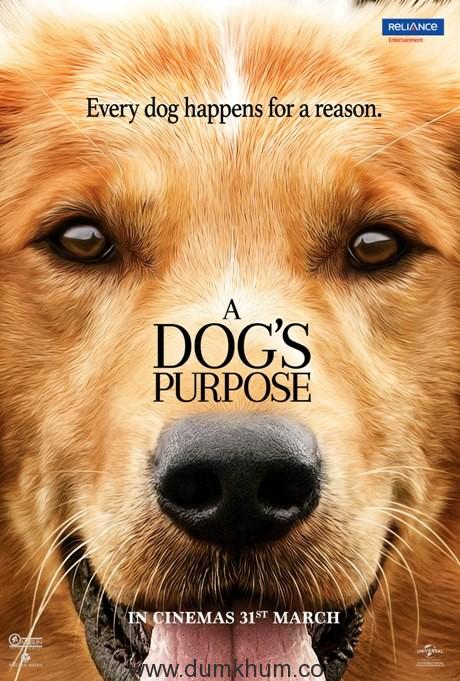 Xem Phim Mục Đích Sống Của Một Chú Chó 2017