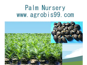 How Superior Palm Nursery?