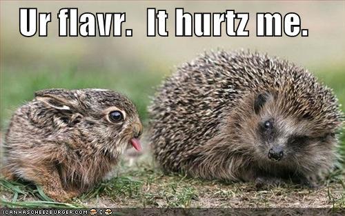 Image result for porcupine funny