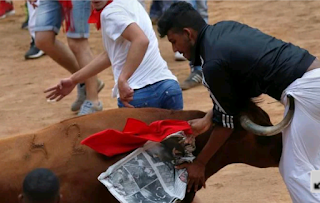 A man tossed by a wild bull in Spains popular bull run festival