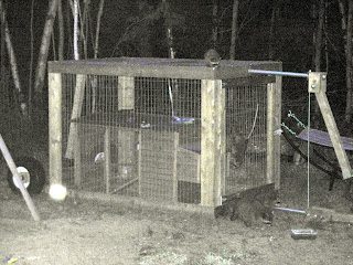 Predator Proof Chicken Coop