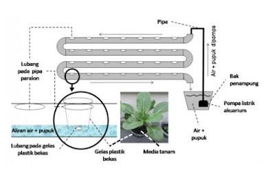 Cara Menanam Hidroponik Yang Benar | Bertaniyok