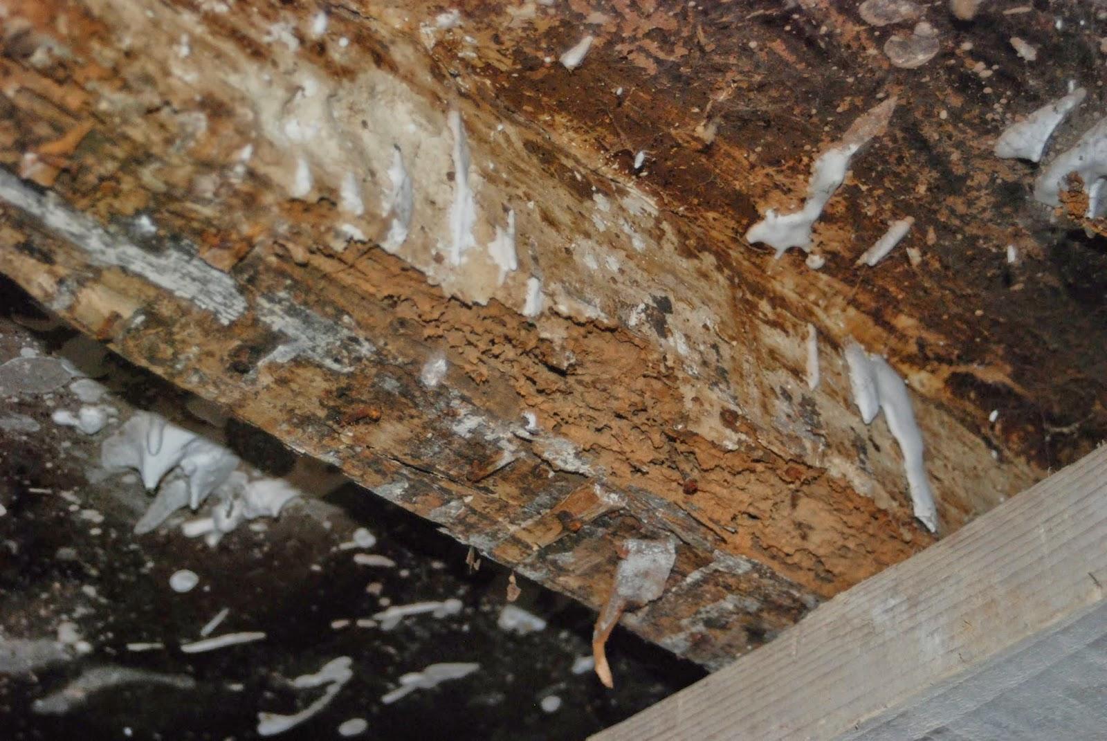 moisissure parquet conseils menuiserie bricoler le bois. Black Bedroom Furniture Sets. Home Design Ideas