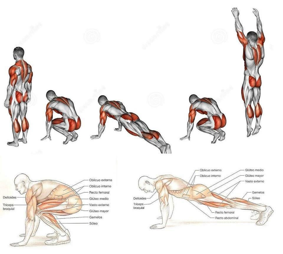 muscolo tirato sopra losso pelvico