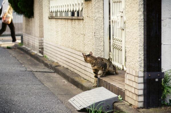 koenji cats