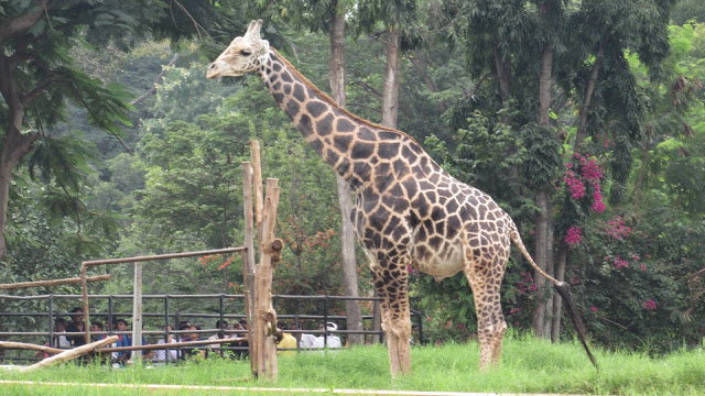 Mysore Zoo Pictures