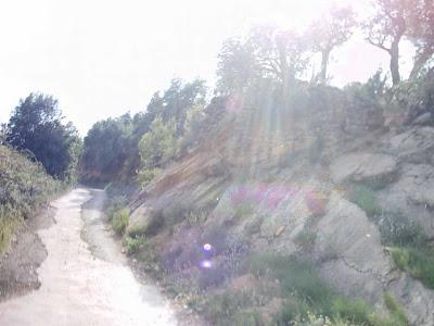 La pileta, camino, pantano de Pena, embalse, finca, almendros, olivos 9