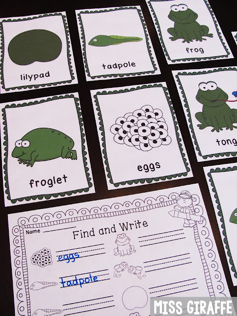 Life Cycle of a Frog science center that is fun and easy – simply put the picture cards around your classroom and let students find and write their new science vocabulary words like tadpole, froglet, etc.