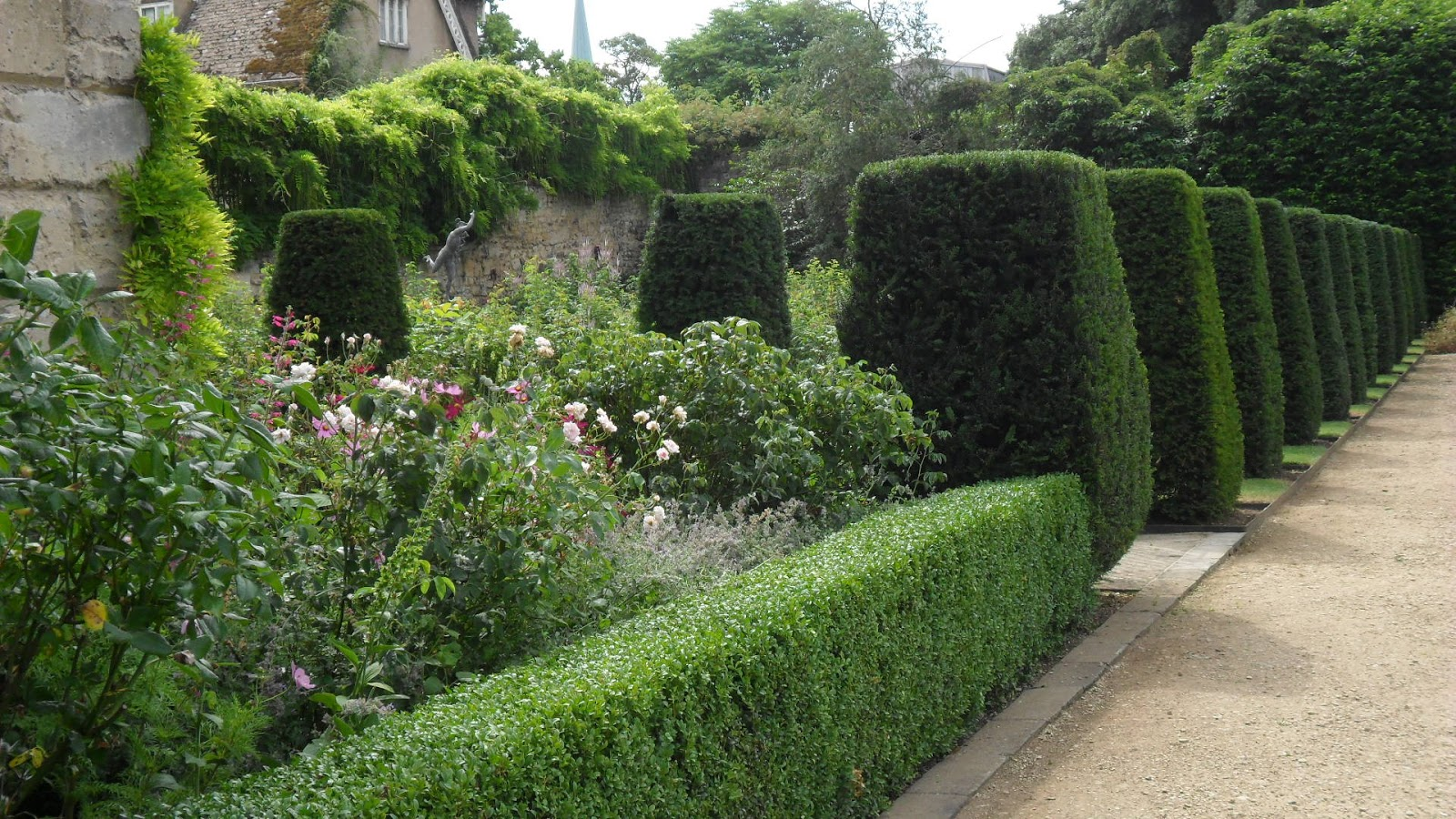 Hedge Bushes: Worcester College Gardeners 2009-2018: Yew Hedges, Yew