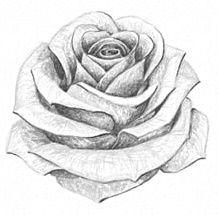 76+ Gambar Bunga Mawar Pensil Terbaik