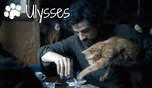 inside-llewyn-davis-ulysses-cat