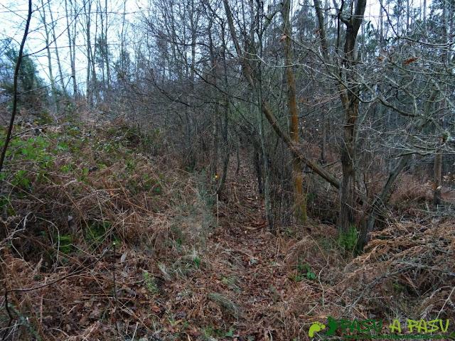 Alto la Corona o Pico La Ablanosa: Bosque en la zona alta
