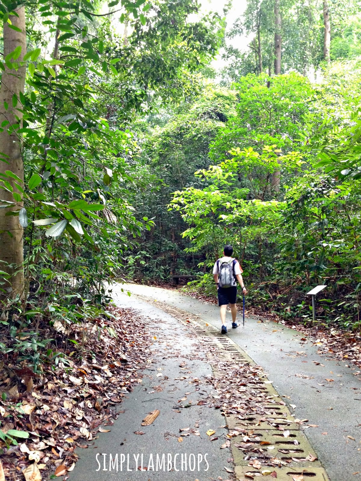 Bukit Timah Nature Reserve by Simply Lambchops