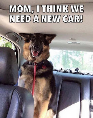 Funny dog pictures : We need a new car