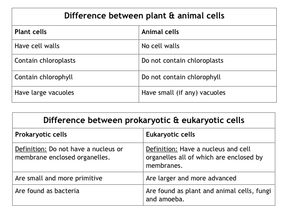 Cell structure notes and sample answers contain green pigment called chlorophyll ccuart Images