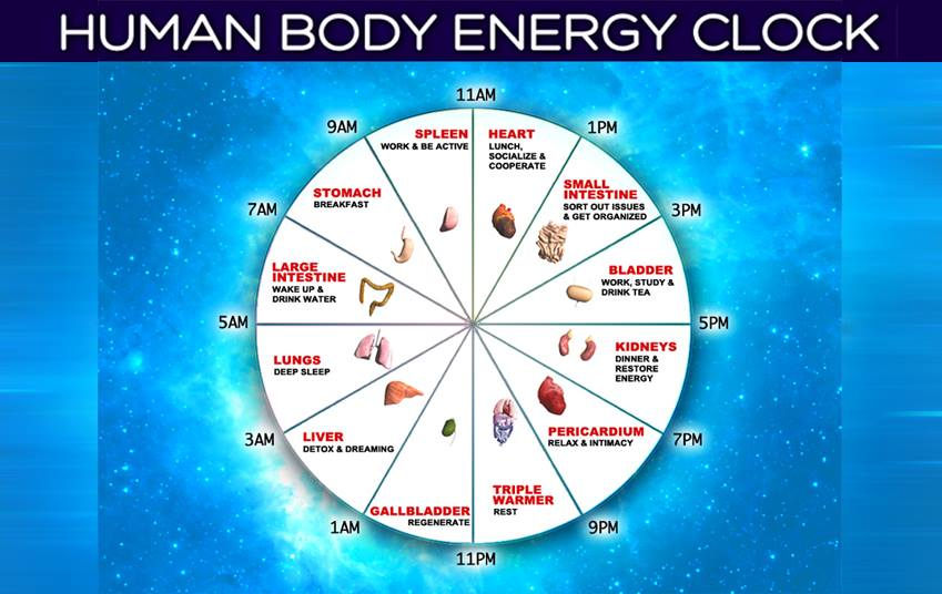 human body clock