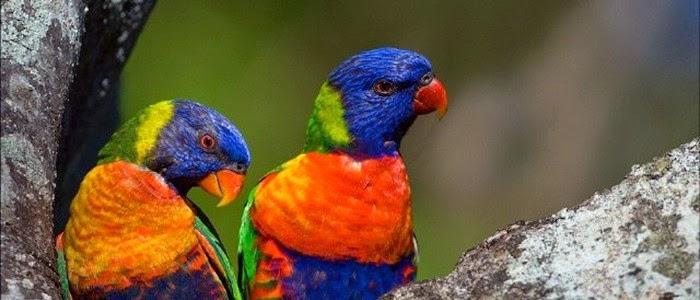 Guinate Tropical Park