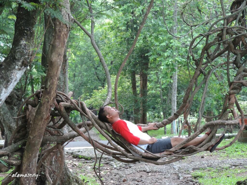 Bertemu Pohon Unik Di Kebun Raya Purwodadi Alamasedy