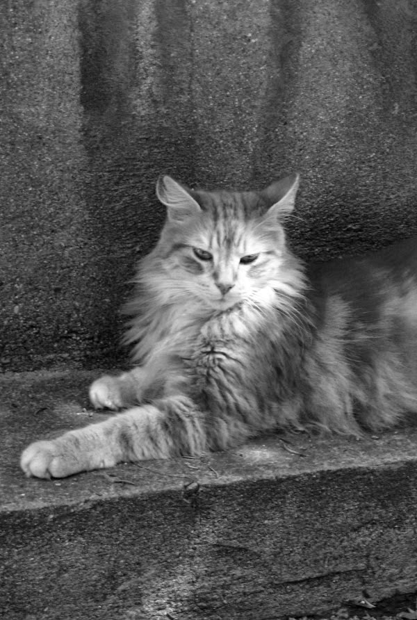chat rencontre paris