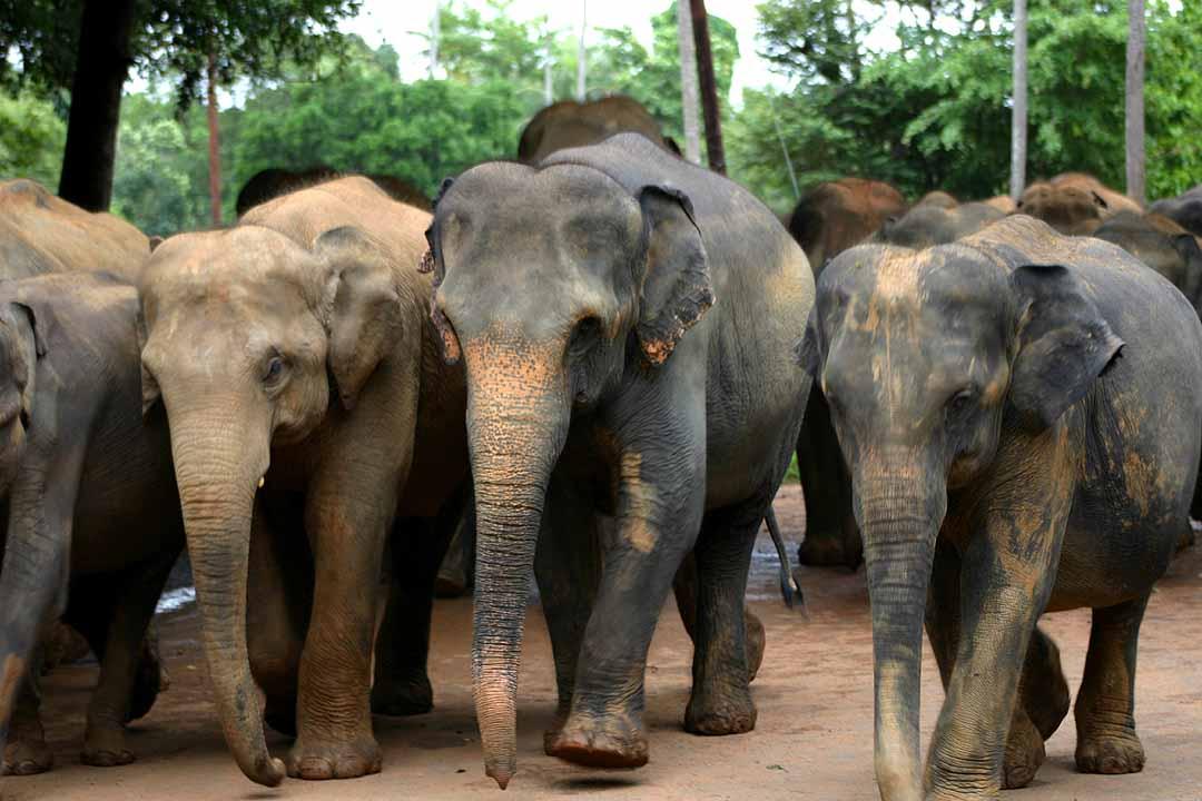 Tour Sri Lanka  Sri Lanka Funny Images Sinhala Jokes,Sri -9258