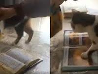 Ada Netizen Kecam Video Kucing Ajaib Yang Tahu Al-Quran Adalah Kitab Suci