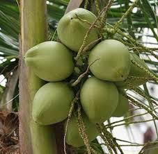 http://danahauses.blogspot.com/2016/11/manfaat-buah-kelapa-bagi-tubuh-anda.html
