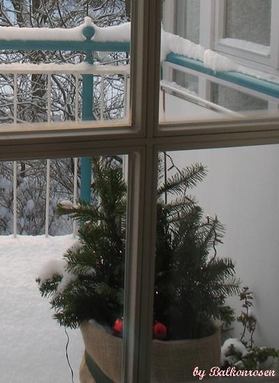 wenn der frost kommt winterschutz f r meine balkonrosen. Black Bedroom Furniture Sets. Home Design Ideas