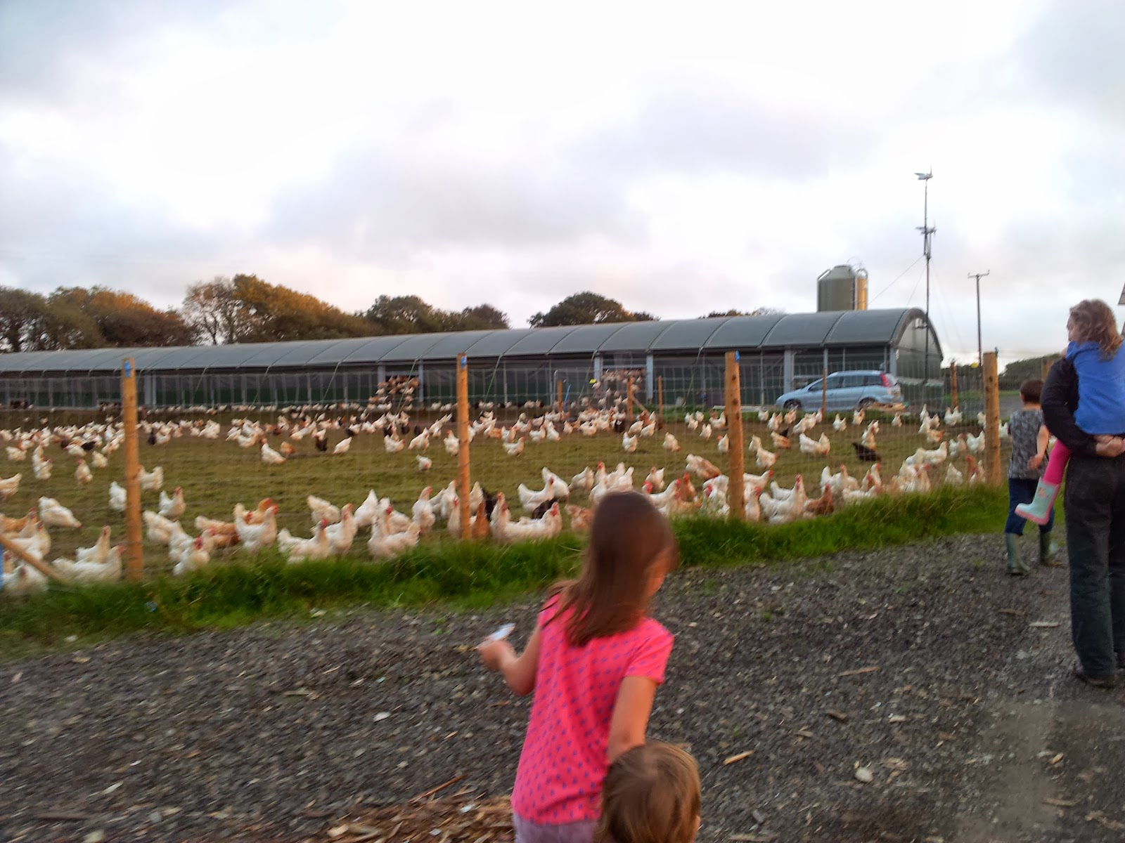 , Chickens on the Farm