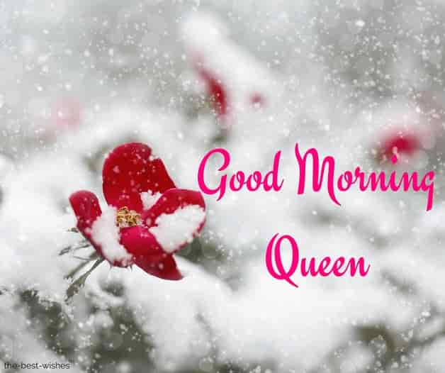 good morning queen images